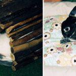 Paradepower: Haustiere und ihre Besitzer