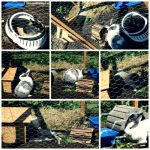 12in2012 – Eine erste Stallbegehung