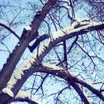 Der Zauber eines Winters…