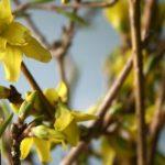 Frühling, Frühling ist schon dahaaa….*sing*