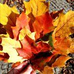 #Freitags5 – 5 Tage 5 Fotos im November #01