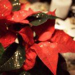 Der Tag nach Weihnachten…