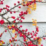 #Freitags5 – 5 Tage 5 Fotos im November #04