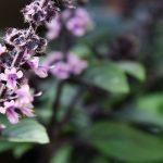 #Wasmichglücklichmacht – 5 Orte, die mich glücklich machen