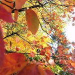 #Freitags5 – 5 Tage 5 Fotos im Oktober #02