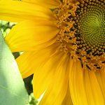 #fünffragenamfünften im September – Wohlfühlkleidung und Frustschoki