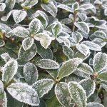 Wochenlieblinge 42/2019 – Sportlich, gruselig und frostig kalt!