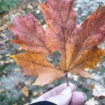 15 Minuten – Die vielen Farben vom Herbst
