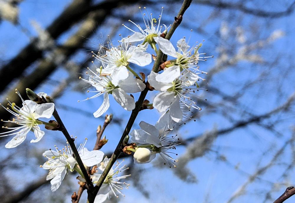 Ausmalbild im Frühling