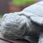 Unsere Glücksmomente 24/2020 – Schildkrötenliebe?