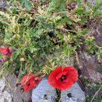 Unser verlängertes Pfingst – #WIB mit einem Gartengroßprojekt