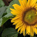 #30am30 im August – Gute Dinge und Glücksmomente im August