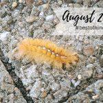 #bestofnine im August 2020 – Sommerhitze und Schulanfang