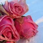 Unser #WIB am 13./14.02.2021 – Valentinstagsgrüße aus dem Schnee