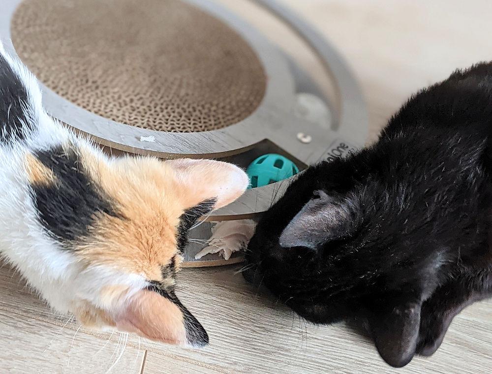 Katzenconten