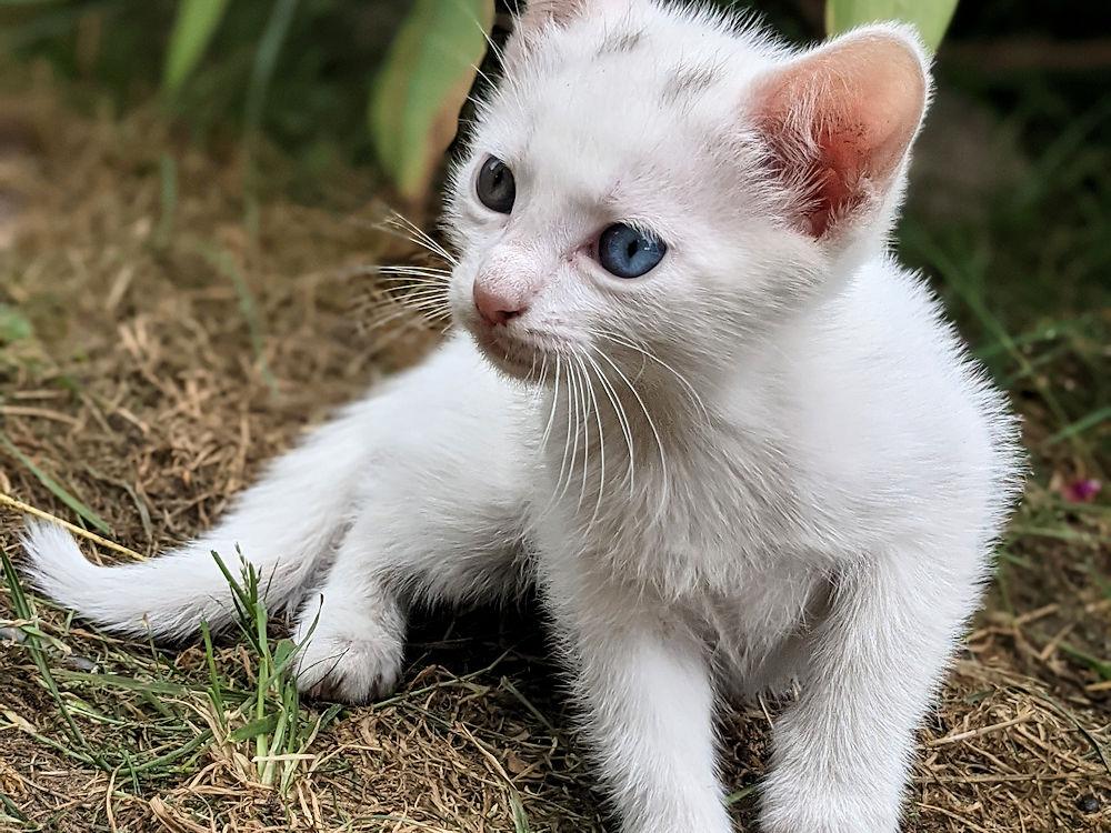 Katzenkontent