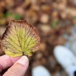 Wochenlieblinge 36/2021 – Haare, Fototermin und Herbstglühen