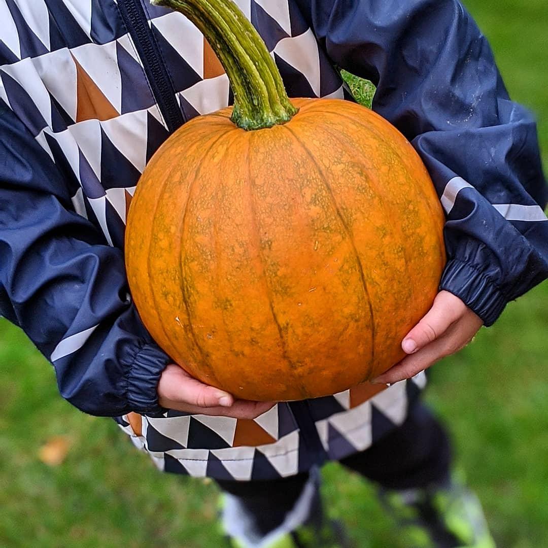 """Wir präsentieren unseren #halloween #kürbis in Ausbildung. Ist er nicht grandios geworden? Bald bekommt er noch """"sein Gesicht"""", sagt der große Sohn.  #halloween #kürbis #pumpkin #halloweenkürbis #garten #ernte #stolzeskind #stolz"""